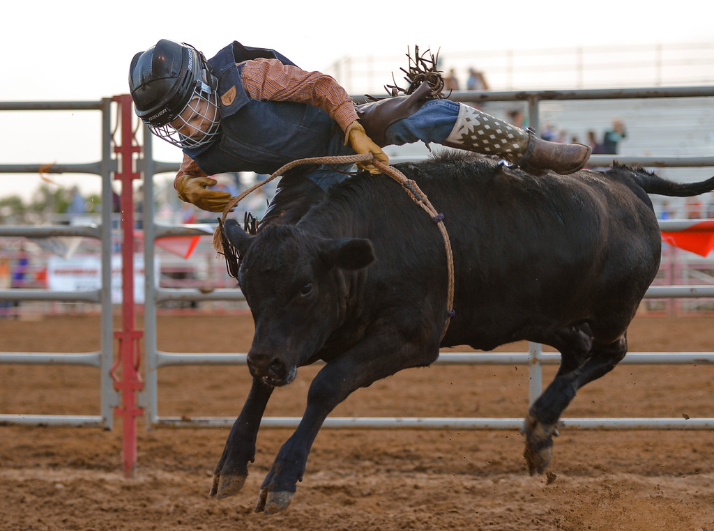Justin Sheely | The Sheridan Press<br /> Charlie Gage falls off in the junior calf riding event during the Sheridan County Rodeo Friday evening at the Sheridan County Fairgrounds. Performances continue Saturday at 1 p.m. and 7p.m. and Sunday at 1 p.m.