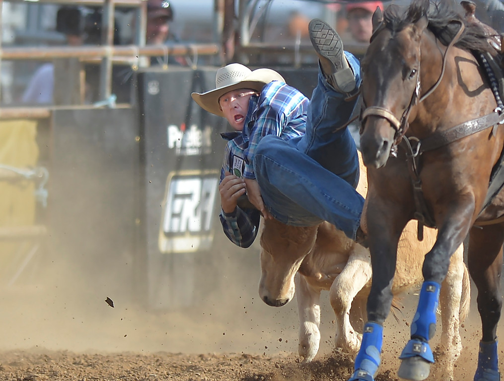 Justin Sheely | The Sheridan Press<br /> Nick Guy of Sparta, Wisconsin, slips over the steer in steer wrestling during the Cowboy State Elite Rodeo Athletes premier tour at the Sheridan County Fairgrounds in Sheridan. Sheridan was the only stop in Wyoming for the premier tour of the ERA rodeo, which is comprised of some of the most prestigious rodeo athletes.