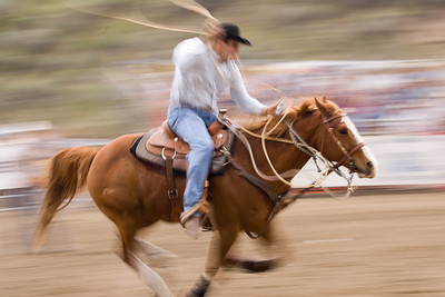 Working horse helps his cowboy