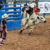 DS_Rodeo-4882