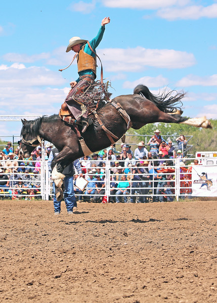 Sam Thurston saddle bronc rider on Fransis Rodeo's Bronc #224