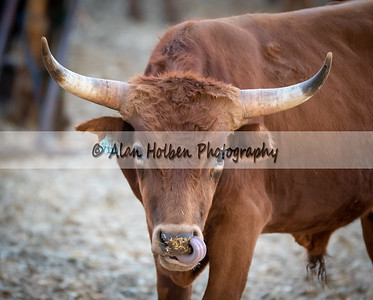 Rodeo_20190905_0355