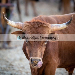 Rodeo_20190905_0359