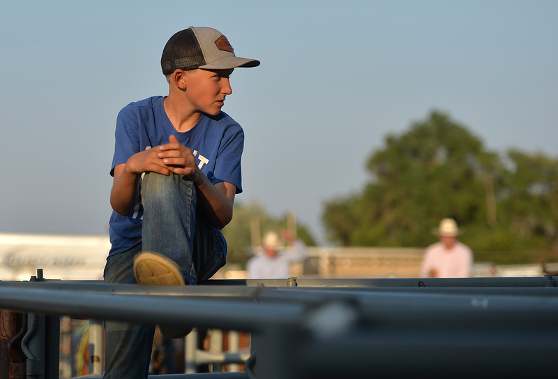 Justin Sheely   The Sheridan Press<br /> Nick Albrecht look over the steers behind the roping chute during slack at the Sheridan County Rodeo at the Sheridan County Fairgrounds Friday, Aug. 10, 2018.