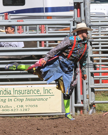 Bull Riding Bickleton Rodeo 2013