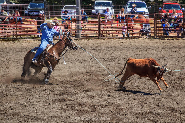 Paired Roping Competition