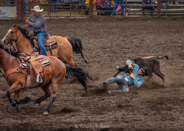 Steer Wrestling, Part 3
