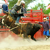 Wild bull riding at the rodeo