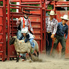 Lamb riding contest at rodeo