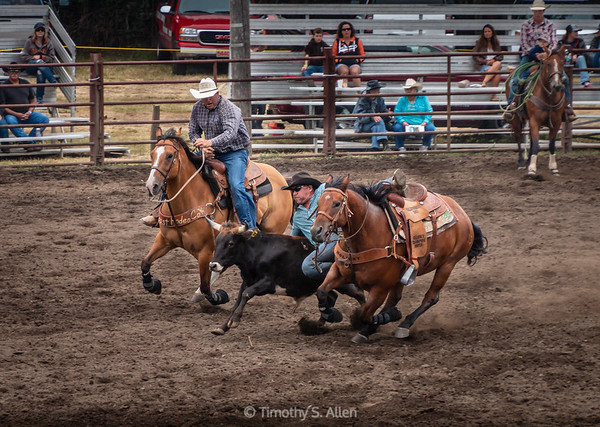 Steer Wrestling: Part 2