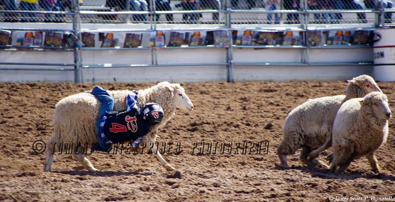 """Mutton Busting"""