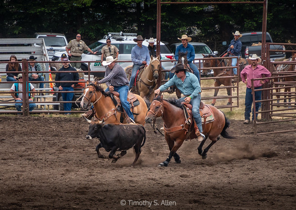Steer Wrestling, Part 1