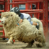 Comfy sheep riding at the rodeo