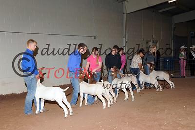 Odessa2013-Goats-003 Sr Showmanship ianCOBB