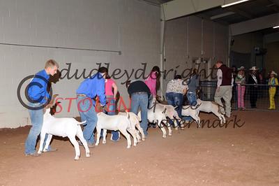 Odessa2013-Goats-002 Sr Showmanship ianCOBB