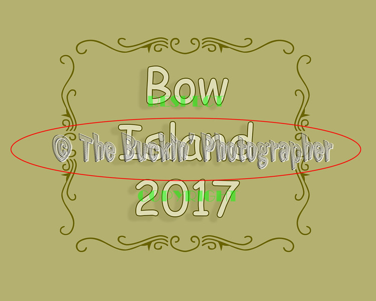 bowisland2017