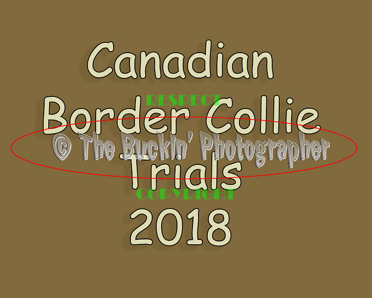 Canadian Border Collie 2018