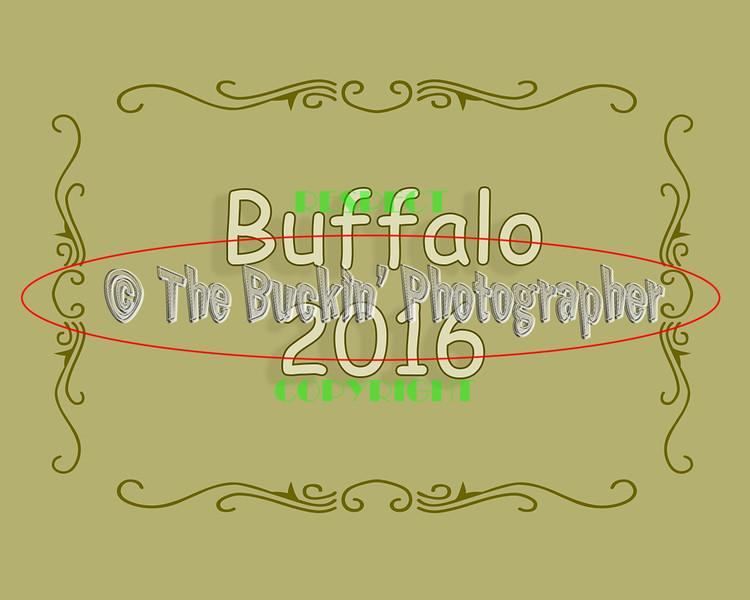 Buffalo2016
