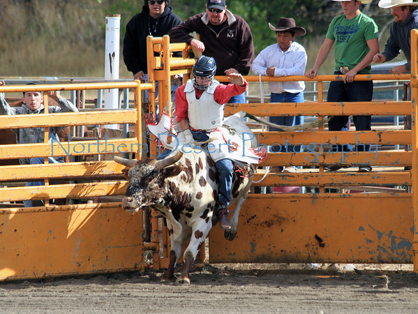 Bull Riding ~ Saturday