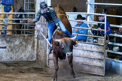 Rough Stock Rodeo