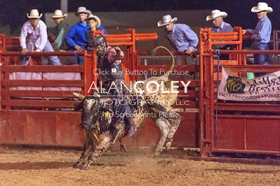 Bull Riding-7-20-18