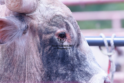 Orange County Sheriffs Possee Rodeo-September 16, 2012-019