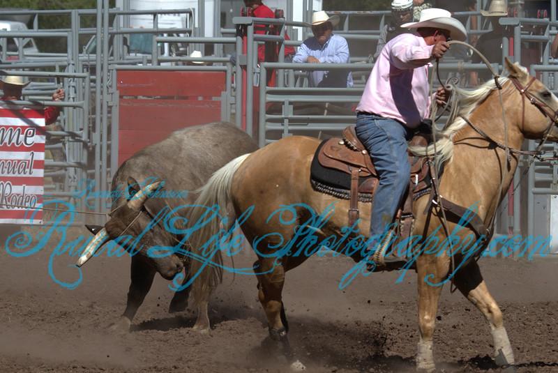 2013 Alder Creek ( Bulls )