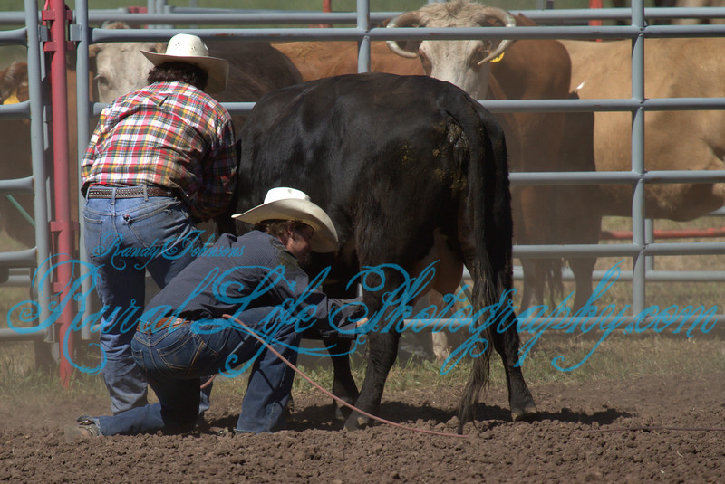 2013 Alder Creek  ( Cow Milking )