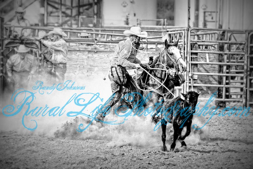 Russell Cardoza Sam Willis pushing the steer