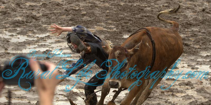 2013 Tillamook Sunday JR Bulls