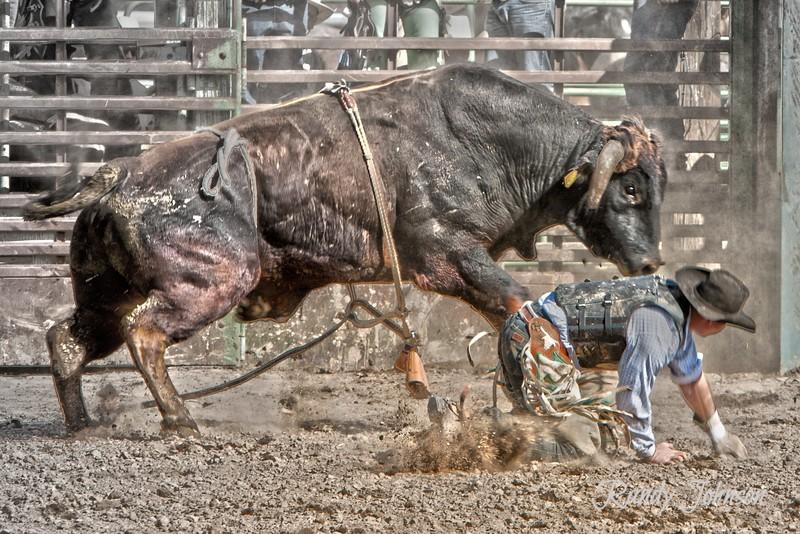 20110508_2938 copyBulldown cowboy