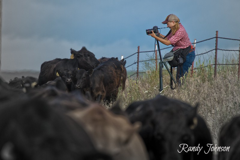 Erika Shultz  Seattle Times shooting Cameron Cattle drive 2013