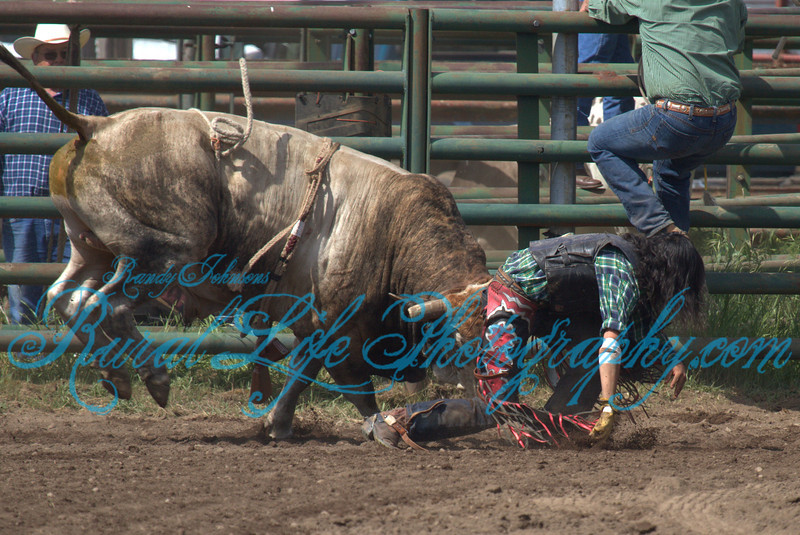 Ketchum Kalf 2013 Bulls