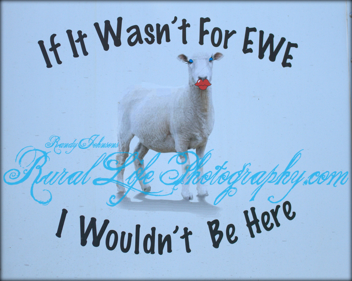 "6657<br /> I saw this sign on a horse trailer as I was leaving Round Up,and after a long day of shooting It pretty much sums it all up.<br />  I like to thank everyone in advance for taking time to View my website,<br /> "" If It Wasn't For EWE<br />  I Wouldn't Be Here""<br /> <br /> See You at the Rodeo !!!!!"
