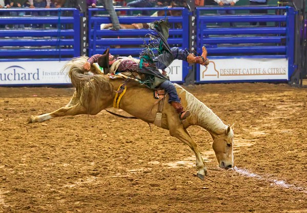 Saturday At The Rodeo