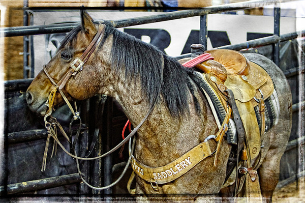 Silver Spurs 130th Semi-Annual Rodeo ..Sunday