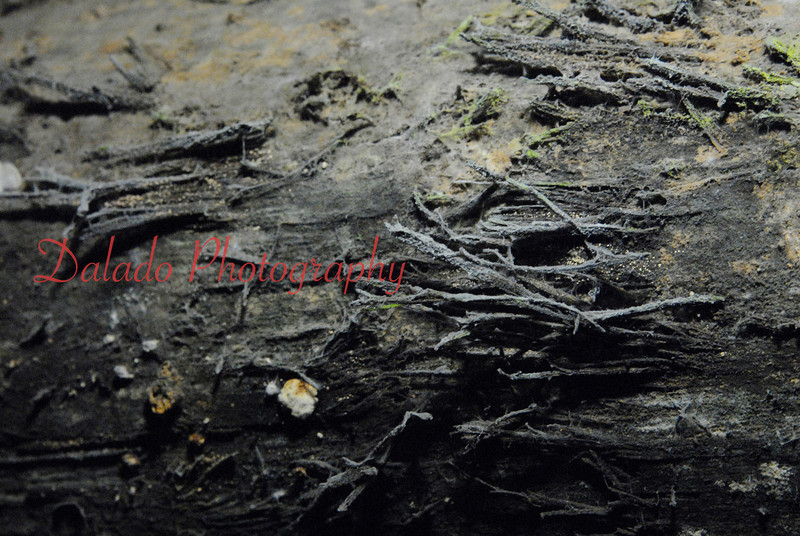 A moldy log at the Pioneer Coal Mine.