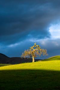 Serpent Tree