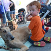 Collin Thomas, 4, enjoys a lollipop and hangs out with rescue greyhound Rolo Jupiter at Johnny Appleseed Festival was held in downtown Leominster on Saturday afternoon. SENTINEL & ENTERPRISE / Ashley Green
