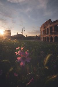 buona notte fiorellino