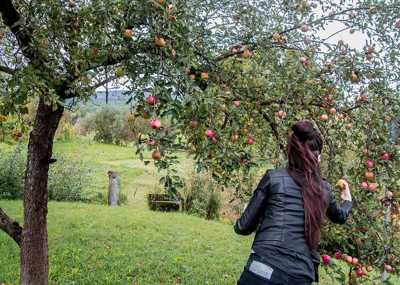 Nikki picking apples