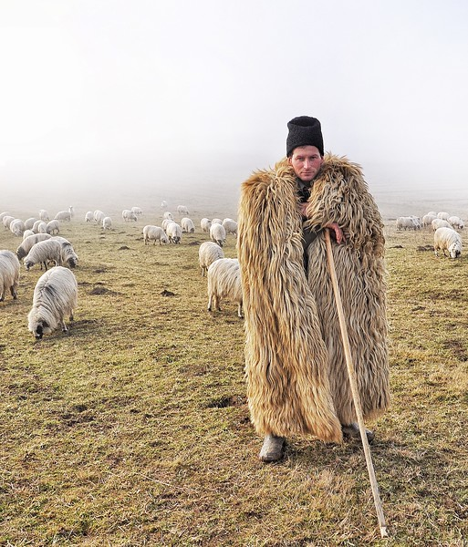 Stroyli Ilia with his Flock of Turcana Sheep. 2018.