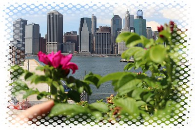 Roses and skyscrapers