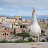 Bird in Rome