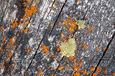 Lichen Lines