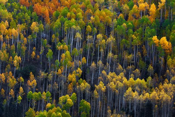 Autumn Matchsticks