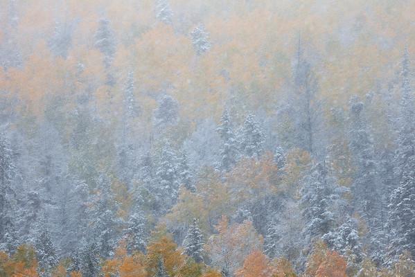 Autumn Blizzard