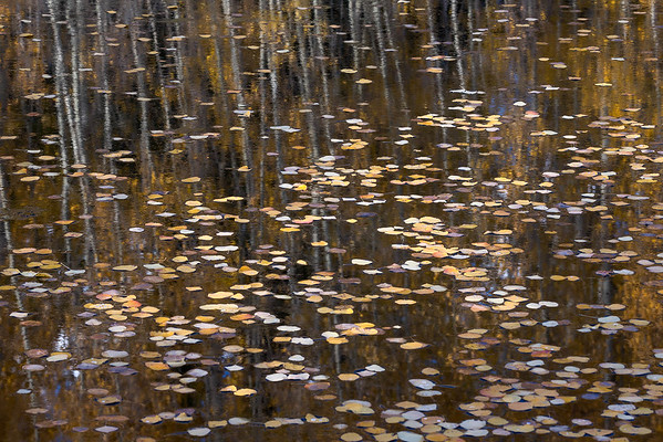 Placid Pond