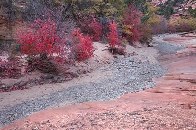 Maple Pathway
