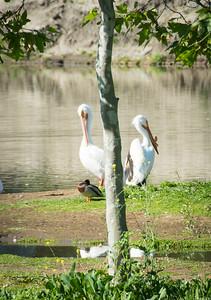 Birding-3183